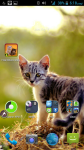 Free Kittens Wallpapers screenshot 4/4