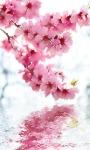 Blossoming Flower over Water Ripple LWP screenshot 2/3