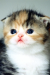 Wallpaper Cute Cat HD screenshot 1/1