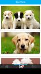 Dog Photo screenshot 2/6