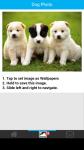 Dog Photo screenshot 3/6