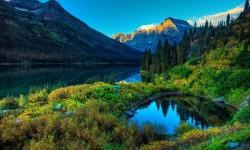 Stunning images of green forest wallpaper screenshot 1/6