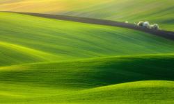 Stunning images of green forest wallpaper screenshot 2/6