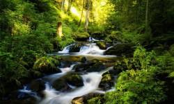 Stunning images of green forest wallpaper screenshot 3/6