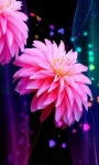 Beautiful Pink Flower LWP screenshot 2/3