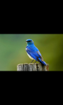 BEAUTIFUL BIRDS HD WALLPAPER screenshot 2/6