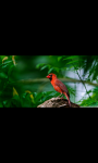 BEAUTIFUL BIRDS HD WALLPAPER screenshot 4/6