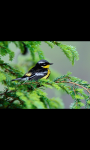 BEAUTIFUL BIRDS HD WALLPAPER screenshot 5/6