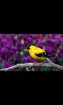 BEAUTIFUL BIRDS HD WALLPAPER screenshot 6/6