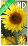 Sunflower Live Wallpaper HD screenshot 1/2