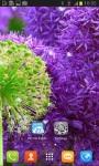 Beautiful Dandelion Flower Live Wallpaper screenshot 3/3