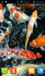 Koi Fish Pond Live Wallpaper Best screenshot 3/4