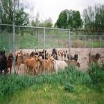Animal Sanctuary screenshot 1/1