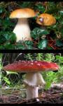 Mushrooms gallery screenshot 1/4