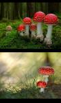 Mushrooms gallery screenshot 3/4