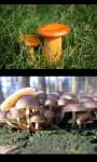 Mushrooms gallery screenshot 4/4