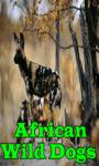 African Wild Dogs screenshot 1/3