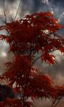 Red Rainy tree Live Wallpaper screenshot 1/3