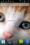 Free Cute Baby Cat Wallpaper screenshot 1/6