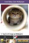 Free Cute Baby Cat Wallpaper screenshot 5/6