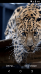 Beautiful Leopard Live Wallpaper HD screenshot 3/6