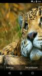 Beautiful Leopard Live Wallpaper HD screenshot 5/6