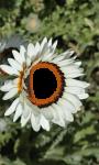 Flower photo frame imges screenshot 4/4