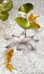Underwater Flower Live Wallpaper screenshot 1/3