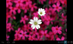 Beautiful Flowers Wallpaper Free screenshot 3/5