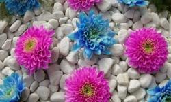 Flower 3D Wallpapers screenshot 5/6