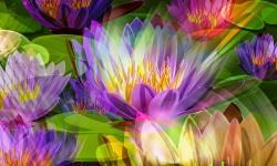 Flower 3D Wallpapers screenshot 6/6