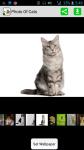 Photo Of Cats screenshot 1/4