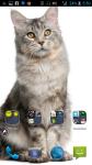 Photo Of Cats screenshot 4/4