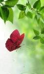 Butterfly On Water LWP screenshot 1/3