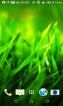 Grass 3D Live Wallpapers screenshot 4/4
