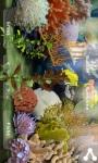 My Fish Aquarium screenshot 4/6