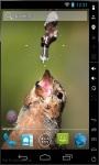 Thirsty Bird Live Wallpaper screenshot 2/2