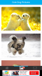 Cute Dog Pictures screenshot 2/6