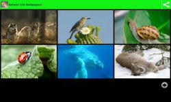 Animal Life Wallpapers screenshot 1/6