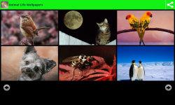 Animal Life Wallpapers screenshot 2/6