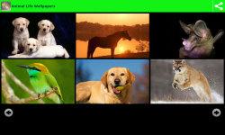 Animal Life Wallpapers screenshot 3/6