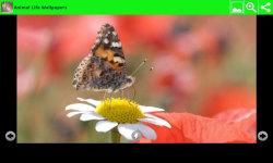 Animal Life Wallpapers screenshot 6/6