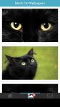 Black Cat Wallpapers screenshot 2/6