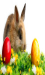 Easter Bunny Eggs Live Wallpaper screenshot 3/5
