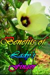 Benefits of ladys finger screenshot 1/3