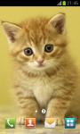 Cute Pussycat Wallpapers screenshot 2/4