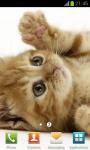 Cute Pussycat Wallpapers screenshot 3/4