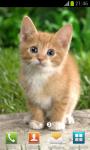 Cute Pussycat Wallpapers screenshot 4/4