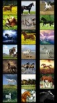Horses Wallpapers by Nisavac Wallpapers screenshot 2/5