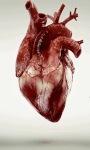 HD Heart Bearting Live Wallpaper screenshot 1/3